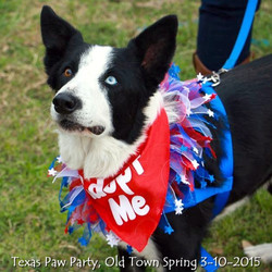 Texas Paw Party 3-10-2015.jpg