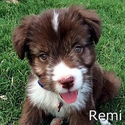 Remi_TN.jpg