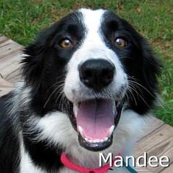 Mandee_TN.jpg