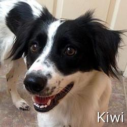 Kiwi_TN.jpg