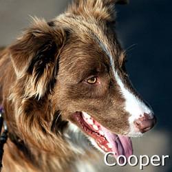 Cooper_TN.jpg