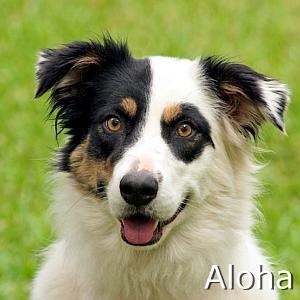 Aloha_TN.jpg