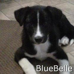 BlueBell_TN.jpg