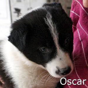 Oscar2_TN.jpg