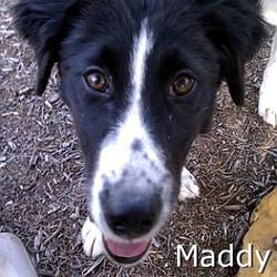 Maddy_TN.jpg