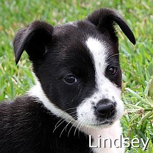 Lindsey-TN.jpg