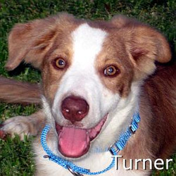 Turner_TN.jpg