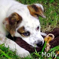 Molly_TN.jpg