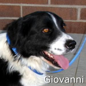 Giovanni_TN.jpg