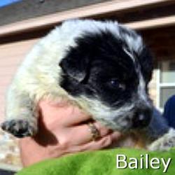 Bailey_TN.jpg