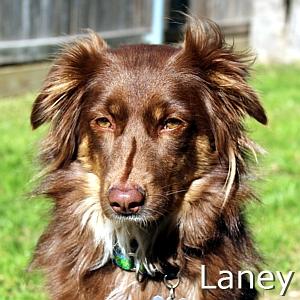 Laney_TN-2