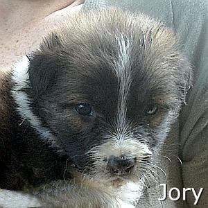 Jory_TN.jpg