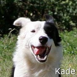 Kade_TN.jpg
