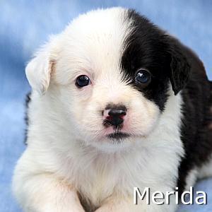 Merida2_TN.jpg