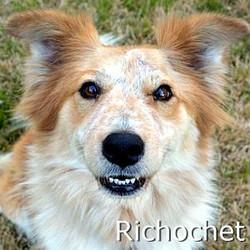 Ricochet_TN.jpg