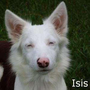 Isis_TN.jpg