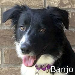 Banjo-TN.jpg