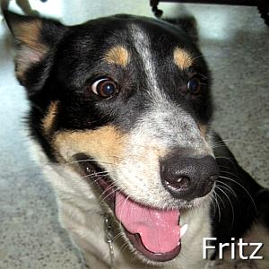 Fritz_TN.jpg