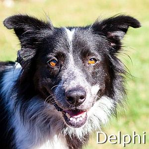 Delphi_TN.jpg