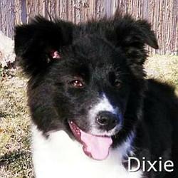 Dixie2_TN.jpg