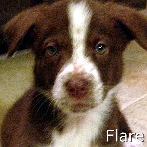 Flare_TN.jpg