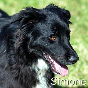 Simone-TN.jpg