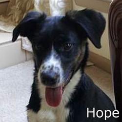 Hope_TN.jpg