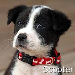 Scooter_TN.jpg