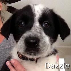 Dazzle_TN.jpg