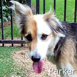 Parker_TN