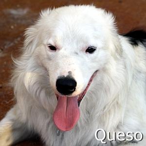 Queso_TN