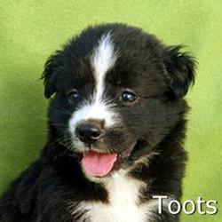 Toots_TN.jpg