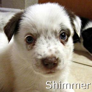 Shimmer_TN.jpg
