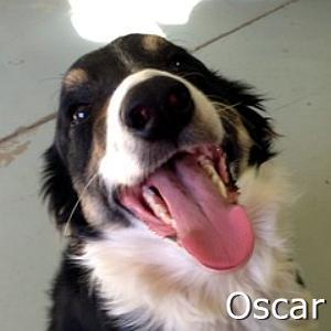 Oscar_TN.jpg