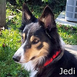 Jedi_TN.jpg