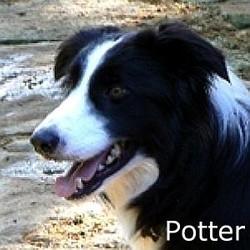 Potter_TN.jpg