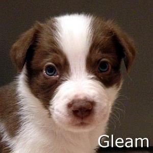Gleam_TN.jpg