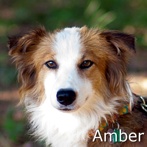 Amber_TN.jpg