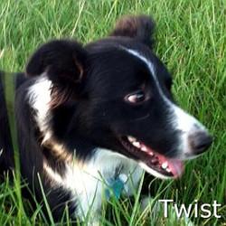 Twist_TN.jpg