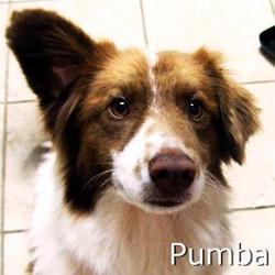 Pumba_TN.jpg