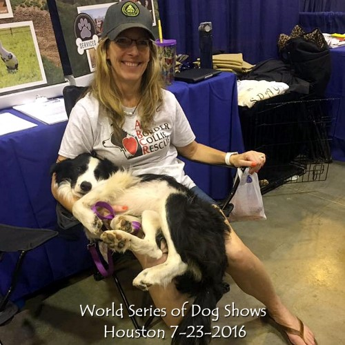 World Series of Dog Shows, Houston 7-23-2016.jpg