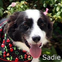 Sadie_TN_New.jpg