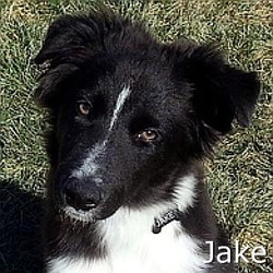 Jake_TN_New.jpg