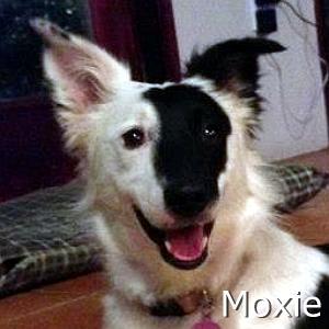 Moxie_TN.jpg
