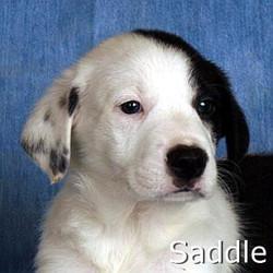 Saddle_TN.jpg