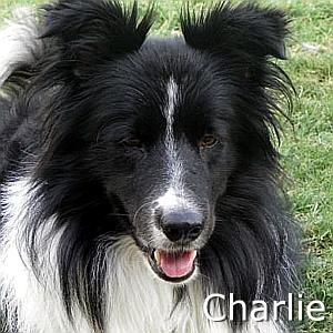 Charlie2_TN.jpg