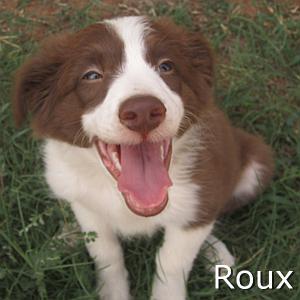 Roux_TN.jpg