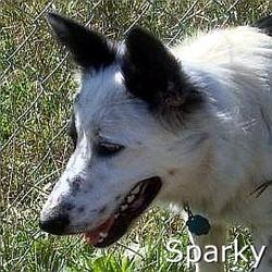 Sparky_TN.jpg