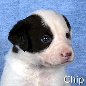 Chip2_TN.jpg
