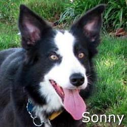Sonny_TN.jpg